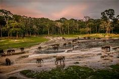 Central African Republic (Dzanga-Sangha Special Reserve)