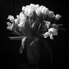 1,300 個讚,8 則留言 - Instagram 上的 @kris_van_assche:「 SUNDAY / HOME / TULIPS #tulips #kris_van_assche #krisvanassche #krisdior #diorhomme 」