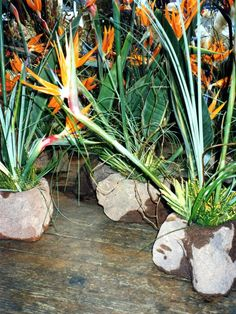 Birds of paradise arrangements in rocks at Wild at heart florist  for science centre,