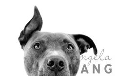 Is this not the cutest pit bull picture ever? I want a pittie!