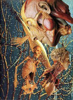 cocofronsac Anatomie Pathologique _ Collages Anatomiques - coco fronsac