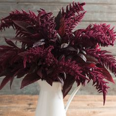Red Spike - New! Darkest red amaranth in our trials. Ideal color and form for late summer and fall arrangements. We found Red Spike to be more useful in arrangements than other amaranth varieties because of its gracefully arched, feathery plumes. $3.95 100 seeds