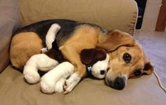 Don't Mind Me, I'm Just Hugging My Buddy! | Cutest Paw