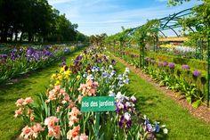 Tous les iris présents dans les jardins peuvent être commandés. 400 variétés au choix. Livraison en août, septembre et octobre en Europe. Iris, Dolores Park, Europe, Travel, Gardens, September, Flowers, Irise, Viajes
