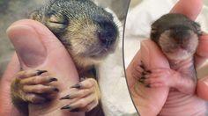 KUSCHELN MIT EINEM FINGER So bedankt sich ein gerettetes Baby-Eichhörnchen