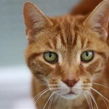 Monty - Cat Rehoming & Adoption - Wood Green Animals Charity