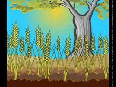 ▶ Parábola del sembrador - YouTube