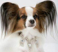 Amour Amour - 3.2 million dollar dog collar. Gulp. I feel so cheap I only spent 16.00 bucks on my dog.