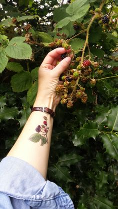 Temporary Tattoos by Alice Draws The Line;adorn yourself in botanical illustration; Small Flower Tattoos, Flower Tattoo Designs, Small Tattoos, Cool Tattoos, Blackberry Tattoo, Strawberry Tattoo, Art Nouveau Tattoo, Sunflower Tattoo Shoulder, Small Shoulder Tattoos