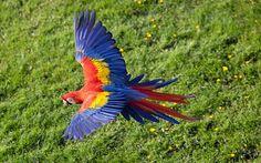 Vamos Combater a Extinção!!!: uma lista de algum animais em extinção pra vcs verem que nao são poucos