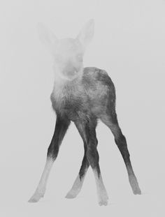 Poster | DEER FAWN (BLACK & WHITE… von Andreas Lie