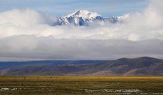 Yak and the mighty Tibet Himalayan Mountain Range