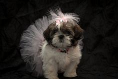 Doggie Tutu & Bow Set Puppy Tutu Photo Prop for Pets
