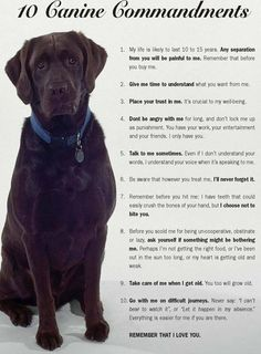 The dog commandments