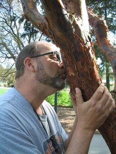 Paperbark Maple---Morton Arboretum
