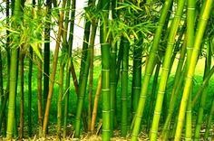 Bamboo Farming - design realpalmtrees.com - #Fall #palmtreelandscape #cool #palms #palmTrees #fallwinterIdeas #plants buy palm trees #DIYIdeas #TropicalYardIdeas #texas #realpalmtrees #california #florida