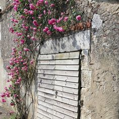 Roses / Travel Gourmande