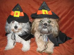 5 Halloween Costumes for Pets   Reader's Digest
