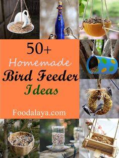 50+ Unique Homemade Bird Feeder Ideas - Foodalaya.com