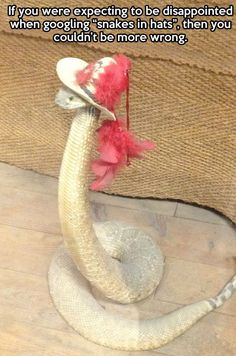 "If you were expecting to be disappointed when googling ""snakes in hats"" - Create your own Memes at: The Memes Factory http:thememesfactory.com"