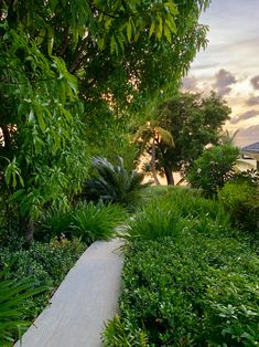Our garden is a large part of Calabash. Here you will not only find balance and tranquillity but there is also a lot to discover. Jermaine is a great guide and will give you a great tour. Caribbean, Most Beautiful, Sidewalk, Tours, Island, Beach, Garden, Garten, The Beach
