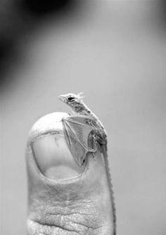 Cool tiny dragon