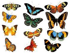 VINTAGE BUTTERFLY Collage Sheet  12 Beautiful Butterflies
