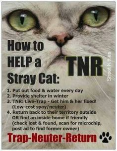 We have a TNR (Trap-Neuter-Return) program at the HBSPCA.  Please visit us at www.hbspca.com or call 905-574-7722 x0