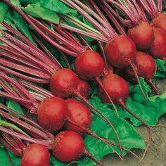 Beetroot Detroit 2 Crimson Globe Seeds - Irish Plants Direct