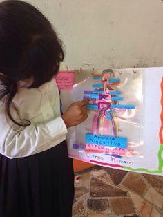 TIPS DE ACTIVIDADES PARA TU GRUPO ESCOLAR: Excelente material para que los niños comprendan los Sistemas y Aparatos del Cuerpo Humano