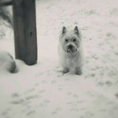 Shelby playing in the Snow!
