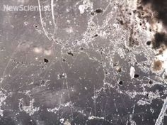 Biologists discover electric bacteria that eat pure electrons rather than sugar, redefining the tenacity of life