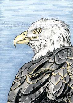 ACEO Original art animal bird eagle feathers miniature illustration - SMcNeill