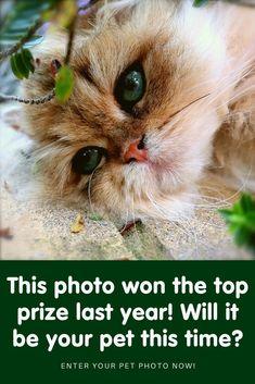 Cute Cats And Kittens, I Love Cats, Kittens Cutest, Pretty Cats, Beautiful Cats, Animals Beautiful, Cute Little Animals, Cute Funny Animals, Funny Animal Videos