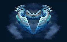 wings of fire♡