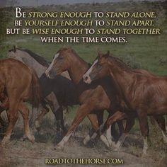 Christian Warrior, Standing Alone, Horse Quotes, Inspirational Quotes, Horses, Animals, Live, Life Coach Quotes, Animales