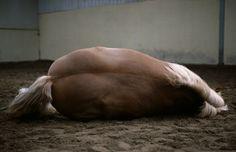 Four Horses - Charlotte Dumas