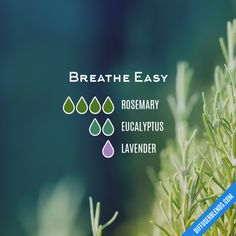 Breathe Easy - Essential Oil Diffuser Blend - New Ideas Essential Oil Scents, Essential Oil Diffuser Blends, Essential Oil Uses, Doterra Essential Oils, Young Living Essential Oils, Essential Oil Combinations, Aromatherapy Oils, Breathe Easy, Flu Remedies