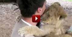 Lion Cubs Hug Trainer on his Last Day - Adorable - Cute Video Love knows no bounds. Mary Mays, http://systemwun.com/44marymays