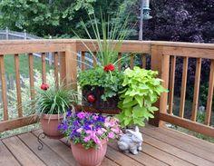 Fountain grass, red geraniums, sweet potato vine, monkey grass, petunias and a bunny.