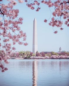 National Cherry Blossom Festival, United States #Washington Tidal Basin  #Trip #Travel #Sightseeing Spots, Superb Views #SuperbView #Destination #Spring #Flower #CherryBlossom Destinations, Amazing Places, Basin, Cherry Blossom, San Francisco Skyline, The Good Place, Places To Go, Washington, Traveling