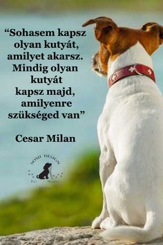Cesar Milan, Jokes Quotes, Beagle, Yorkie, Animals And Pets, Motivation, Van, Pictures, Doberman