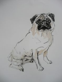 Pet Portraits Dun Laoghaire www.maryfrancesconsidine.com Percy, Pug, Ink on Watercolour Painting Pet Portraits, Wall Art, Pets, Paper, Pictures, Painting, Animals, Photos, Animales