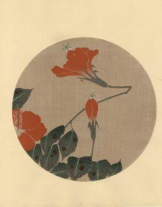 Ito Jakuchu:   'Hibiscus'    1930s