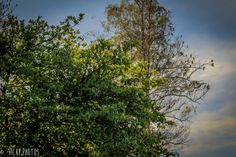 """""""A ordem das árvores não altera o passarinho."""" @vicky_photos_infantis https://www.facebook.com/vickyphotosinfantis http://websta.me/n/vicky_photos_infantis https://www.pinterest.com/vickydfay https://www.flickr.com/vickyphotosinfantis"""