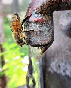 Love it when our fountain can feed the bees! I took this ... love photography. - Curtis Jones, co-founder, Botanical Interests, Inc.