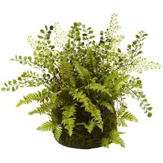 nearly natural Mixed Fern Twig & Moss Basket (Green) (85 CAD) ❤ liked on Polyvore featuring home, home decor, green, green home decor and nearly natural
