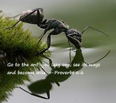 Proverbs 6:6 ¡Anda perezoso, fíjate en la hormiga! ¡Fíjate en lo que hace, y adquiere sabiduría!