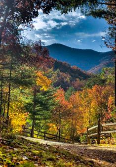 Autumn in Appalachia [photographer unknown]