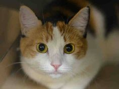 NYC TO BE DESTROYED Sunday 04/19/15 SMORES Is Being Left Behind & She's having difficulty in Facility. Smores former owner stated she loves to play, enjoys petting, uses a scratch post, loves to cuddle & be picked up. ID #A1033309. Female calico about 3 YEARS old. OWNER SUR - from OUT OF NYC, reason MOVE2PRIVA. https://www.facebook.com/nycurgentcats/photos/a.991943497490304.1073742659.220724831278845/991943817490272/?type=3&theater